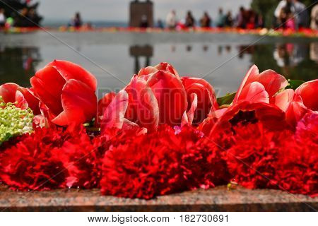 Red tulips and carnations-symbols of victory day. Celebration of May 9 Victory Day