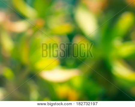 Green Plants Unfocused Background