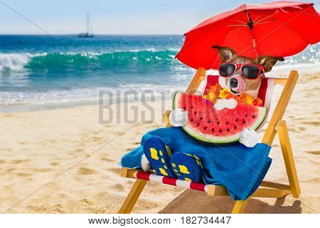 Dog Siesta On Beach Chair