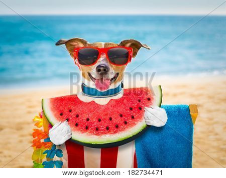 Dog On  Hammock Or Beach Chair