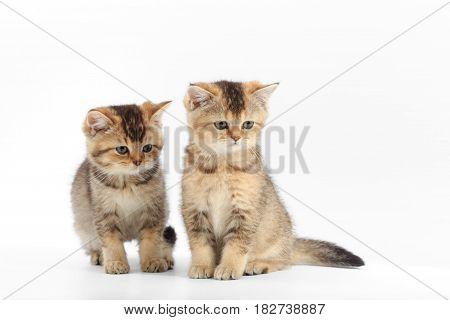 Little Cute Kitten Striped On A White Background