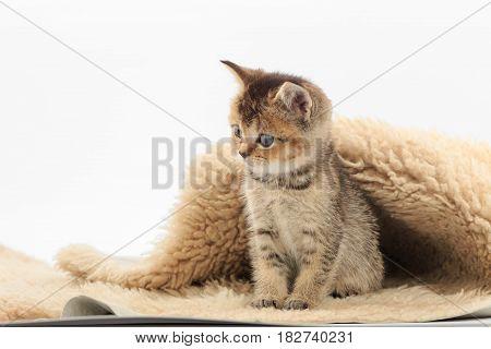 Little Cute Kitten On A Fur Litter On A White Background