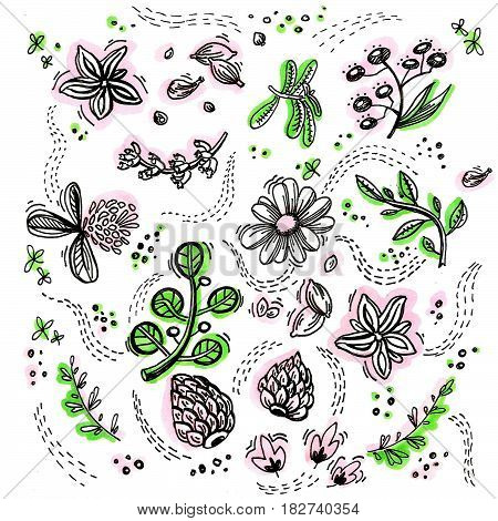 A painted background of flowers, herbs and other vegetable elements