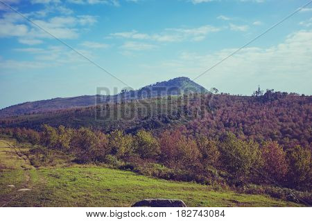 Colorful evergreen forest of beautiful nature with blue sky and cloudy over tranquil nature. Outdoor at the daytime on summer day mountain landscape. Cross process and vintage tone.