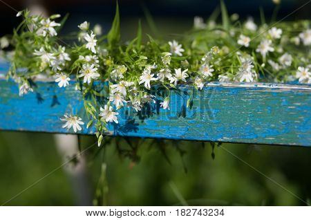 Many small wildflowers on blue wooden board of bench