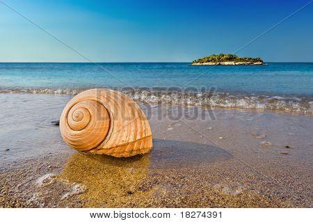 Seashell On Calm Mediterranean Beach