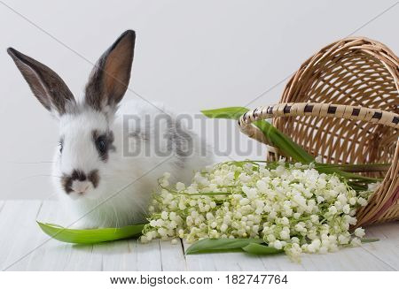rabbits with spring flowers on white background