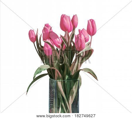 Spring bouquet of pink tulips isolated on the white background in a bucket version 5