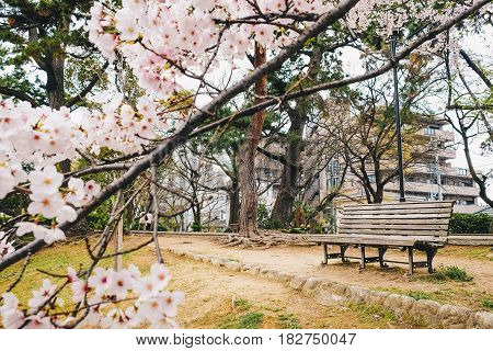 Wooden Park Bench Alone In Sakura Garden