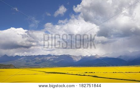 Valley Of Yellow Flowers