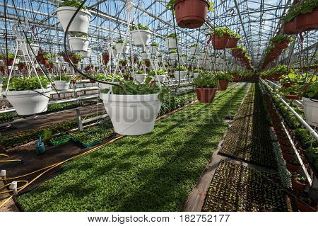 Greenhouse For Growing Vegetables Under Favorable Conditions