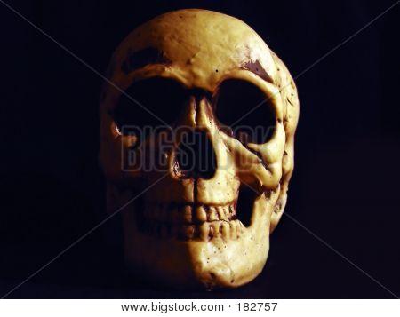 Skull Centered On Black Background