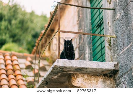 Cats in Montenegro. Montenegro is the country of cats.