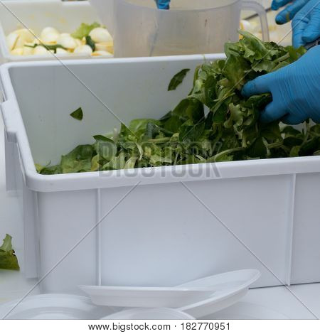 Hands In A Blue Gloves Serving Green Salad