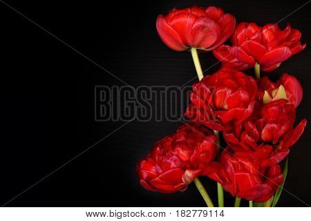 Bright red fluffy tulips on a black surface vintage toning left for inscription on the left