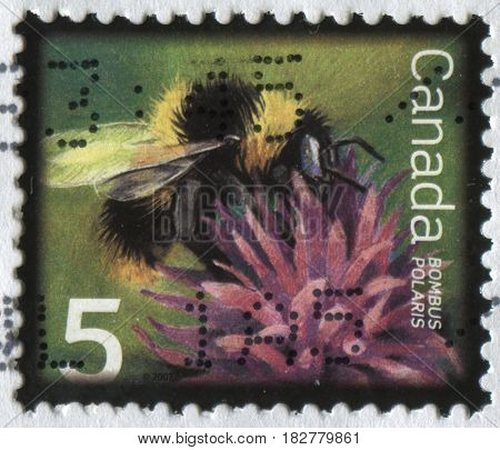GOMEL, BELARUS, APRIL 21, 2017. Stamp printed in Canada shows image of  The Bombus Polaris, circa 2007.