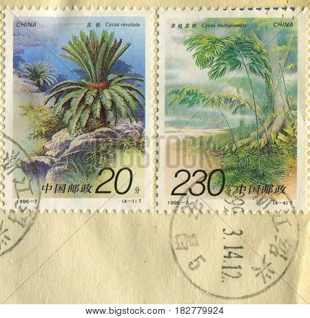 GOMEL, BELARUS, APRIL 21, 2017. Stamp printed in China shows image of  The Cycas revoluta and Cycas multipinnata, circa 1996.