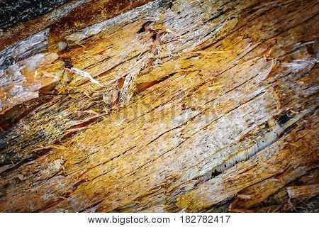 Wood texture background, Abstraction of wood fibers