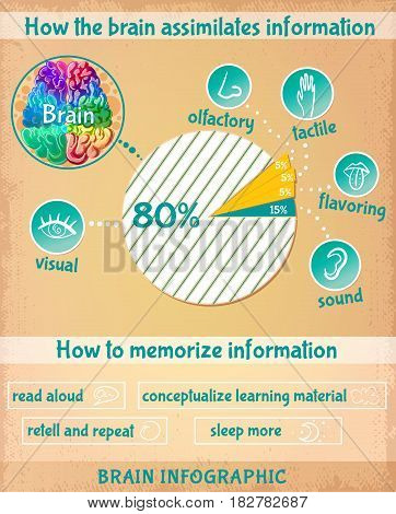 Cartoon human brain infographics with chart of information assimilation and ways of memorizing improvement vector illustration