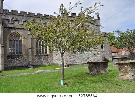 Holy Thorn at St. John's Church in Glastonbury, Somerset, England
