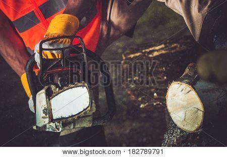 Firewood Logs Cutting by Gasoline Power Saw.