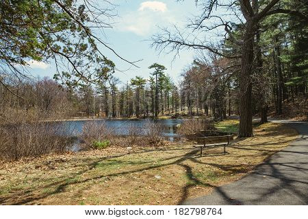 Pine park with a pond. Park with playground in the distance