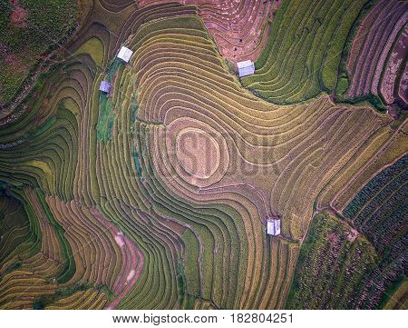 Aerial view of Rice fields on terraced of Mu Cang Chai YenBai Vietnam. Rice fields prepare the harvest at Northwest Vietnam.Vietnam landscapes.