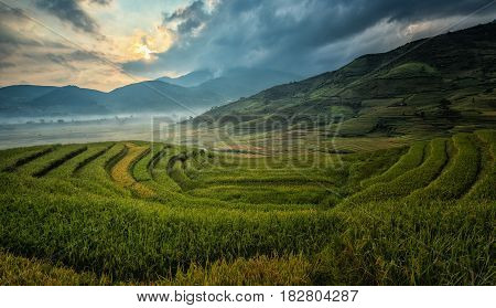 Green Rice fields on terraced in Mu Chang Chai Vietnam Rice fields prepare the harvest at Northwest Vietnam.Vietnam landscapes