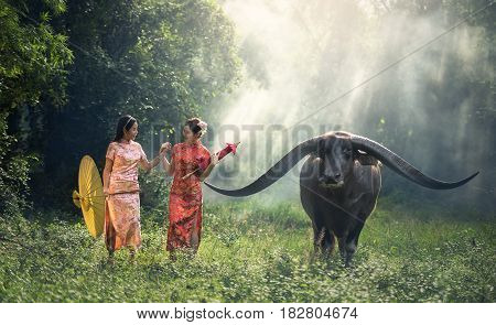 Chinese woman dress traditional cheongsam with buffalo