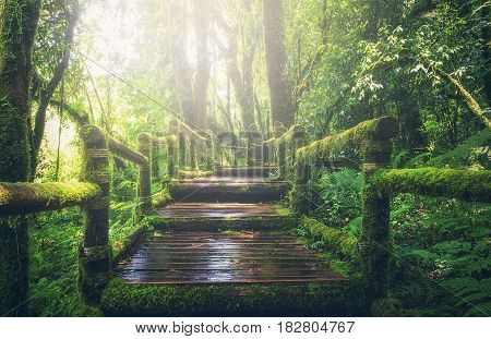 Wooden bridge in tropical rain forest, Thailand