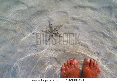Travel To Phi Phi Island, Thailand. A Starfish On A Sand Under The Sea Waves.