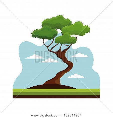 bonsai tree nature decoration landscape vector illustration eps 10