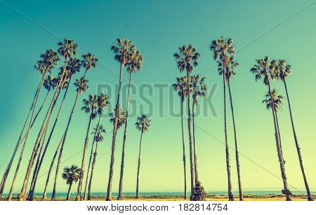 California hight palm trees on the blue sky background vintage toned and stylized retro style Santa Barbara