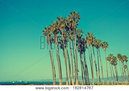 California high palm trees on the beach near the ocean blue sky background Santa Barbara vintage toned and stylized retro style Santa Barbara