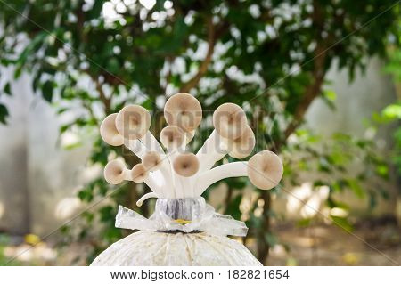 Growing mushroom in garden with blurry tree in the background