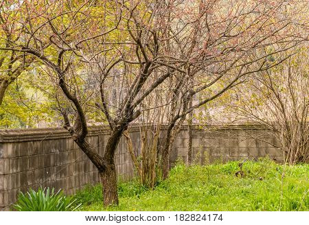 Trees and lush green grass growing inside a space surrounded by a concrete wall in a woodland area in South Korea