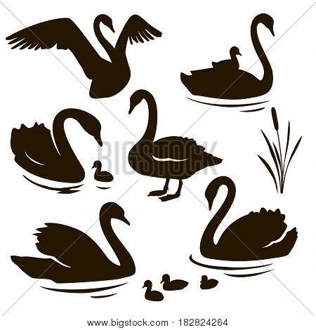 Vector set of swan with nestling silhouette