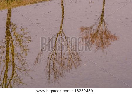 Reflection of trees and shoreline in surface of a lake in South Korea