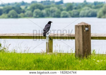 Day view of lonely Crow on lake fencing.