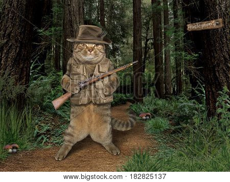 The brave cat is holding a real rifle in the forest. He wears hunting hat and vest.