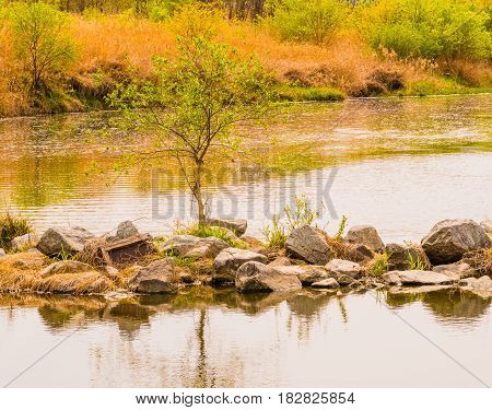 Landscape of a small tree on a rocky outcrop of land in the middle of a small river in a woodland area in South Korea