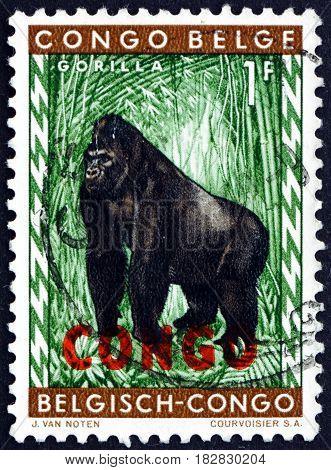 CONGO - CIRCA 1960: a stamp printed in Congo shows Gorilla Human-like Ape circa 1960