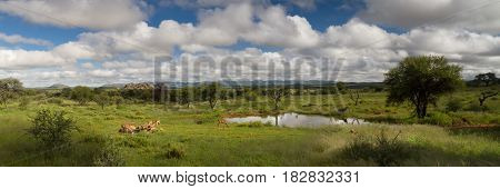 Panorama of a water hole in the namibia savanna near Windhoek Namibia Africa