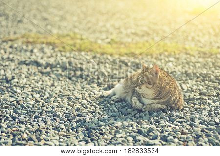 fat tabby cat sit on ground in the outdoor