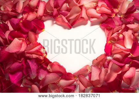 Heart shape frame of red rose petals at white background
