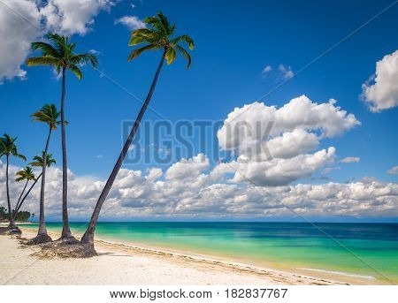Wild beach with white sand and palm trees