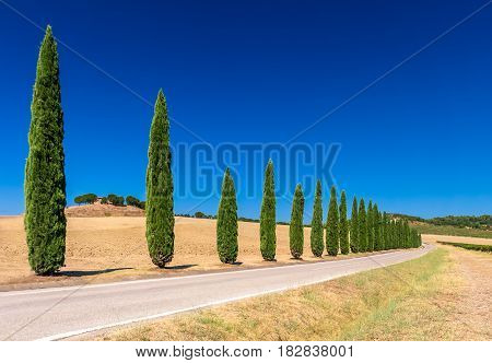 Cypress tree alley in Tuscany in front of blue sky