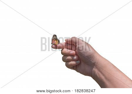 butterfly on finger isolated on white .