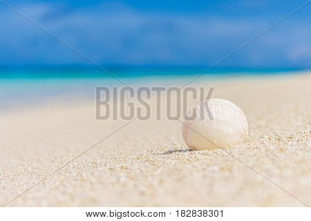 White shell in the sand on the beach