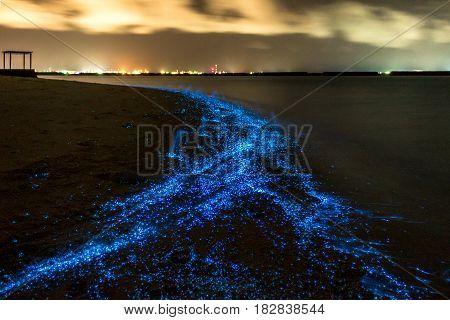 Bio luminescence. Illumination of plankton at Maldives. Many bright particles at the beach.